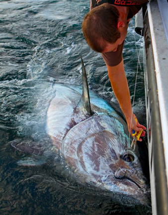 The waterman 39 s journal global sportfishing news reports for Giant fish hook
