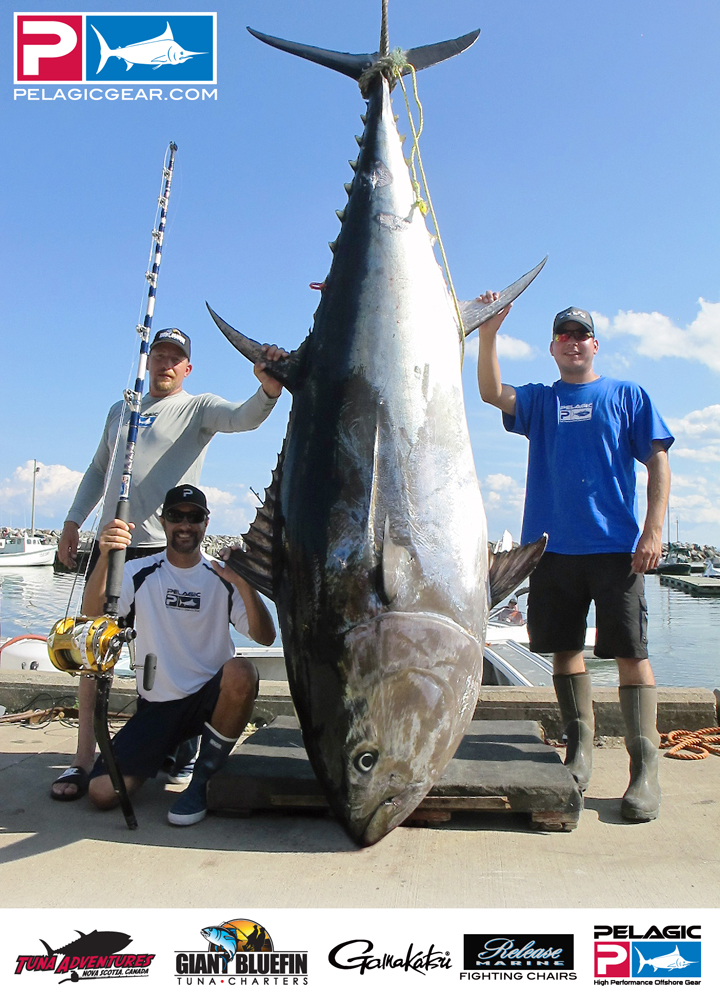 the waterman s journal global sportfishing news reports and more